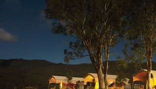 spicers canopy by night_314_179