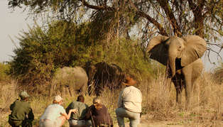 Botswana and Zambia Bush on Foot