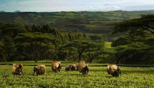 Highlands, Thyolo & Tea Plantations